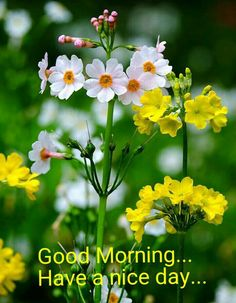 Good Morning Images For Whatsapp Good Morning Massage, Good Morning Msg, Good Morning Cards, Good Morning Flowers, Happy Morning, Good Morning Friends, Good Morning Beautiful Pictures, Good Morning Image Quotes, Good Morning Inspirational Quotes