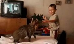 Funny Gif Of The Day: Get Used To It, Kid Gif Of The Day, Octopus, Stupid, Socks, Kid, Cats, Funny, Animals, Child