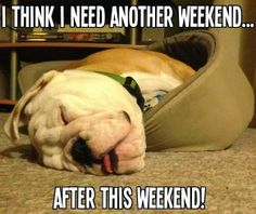 So DogGone Funny!: 14370-Be careful not to overdo it on the weekend; even a dog knows that.| Bulldog