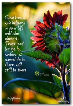 God knows who belongs in your life and who doesn't. Trust & let go, whoever is meant to be there, will still be there.