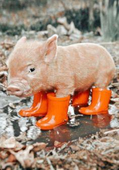 Baby Farm Animals, Cute Wild Animals, Baby Animals Pictures, Super Cute Animals, Cute Little Animals, Cute Animal Pictures, Cute Funny Animals, Small Animals, Animals Dog