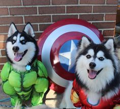 These SUPER dogs look MARVEL-lous! Dog Halloween Costumes, Dog Costumes, Halloween Treats, Funny Dog Images, Funny Dogs, Dog Recipes, Mom Humor, Dog Treats, Dog Mom