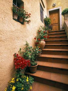 I'd like to have some stairs just so I could line it with plants. Pretty!