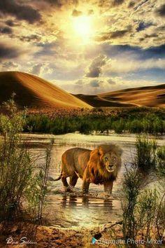Nature Animals, Animals And Pets, Beautiful Cats, Animals Beautiful, Lion Cat, Lion Love, Lion Wallpaper, Wild Creatures, Majestic Animals