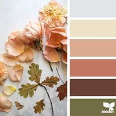 today's inspiration image for { color nature } is by the talented @c_colli ... thank you, Cristina, for generously sharing your gorgeous images in #SeedsColor !