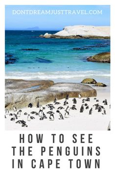 Read on for more details on visiting the wild penguins near Cape Town!