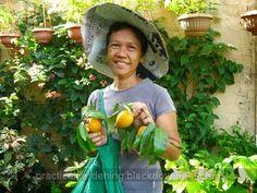Practical Gardening: DIY Fruit Harvester Picker - Four Prongs Garden Rake, Fruit Picking, Kinds Of Fruits, Apple Fruit, Harvester, Small Trees, Gardening Tips, Diy, Apple