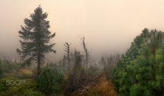 Nebel Keilberg - null