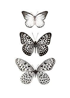 Elegante cuadro con insectos.