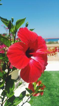 Flower in Crete island, no filter.