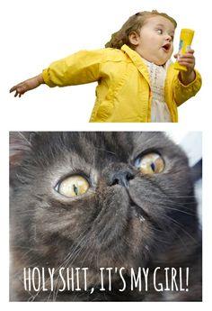 #chubby bubbles girl #meme #cat #cats #holyshitcat