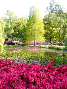 Isabella Plantation - Richmond Park - Richmond, London - Beautifully leafy, and home to hundreds of deer. Richmond Upon Thames, Richmond Park, Richmond London, The Places Youll Go, Places To See, Travel Sights, Royal Park, Royal Garden, Holiday Places