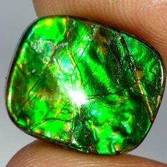 100% Natural Ammolite Cushion Cabochon Royal Loose Gemstones 11.75Cts. Canda Cab #Handmade