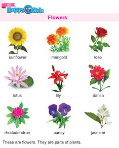 Flower Worksheet For Student Names Flower Worksheet For Student Na Flowers Name List, Flower Names, Types Of Flowers, Fun Worksheets For Kids, School Worksheets, Reading Worksheets, English Writing Skills, English Lessons, Flower Images With Name