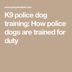 K9 police dog training: How police dogs are trained for duty