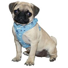 Coastal Pet Products -16338 3/8 Inch L`Il Pals Harness 16 Inch - Bone Blue ** You can find out more details at the link of the image. (This is an affiliate link and I receive a commission for the sales)