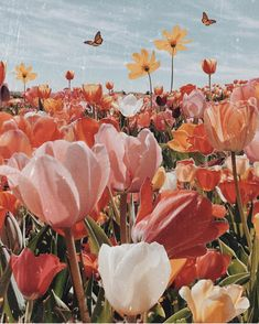 tulips garden care Tulip Season a map of dreams Flor Iphone Wallpaper, Wallpaper Flower, Frühling Wallpaper, Iphone Background Wallpaper, Spring Flowers Wallpaper, Vintage Flowers Wallpaper, Phone Backgrounds, Nature Aesthetic, Flower Aesthetic