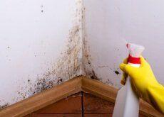 Descubre cómo eliminar las manchas de humedad en las paredes y los techos sin utilizar productos químicos agresivos.¡Inténtalo en casa!