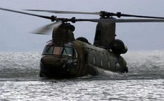 Chinook In For A Swim