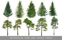 Watercolor Clipart Spruce Pine Conifer trees Forest by ReachDreams Watercolor Trees, Watercolor Texture, Watercolor And Ink, Watercolor Paintings, Tree Illustration, Pencil Illustration, Graphic Illustration, Design Illustrations, Conifer Trees