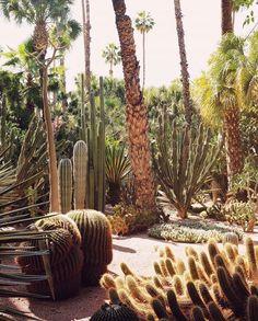Cactus garden inspiration at Le Jardin Majorelle. Low Water Landscaping, Moroccan Design, Green Life, Beautiful Space, Garden Inspiration, Cactus Plants, Flora, Scenery, Landscape