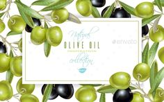 Buy Olive Horizontal Banner by Purple-Bird on GraphicRiver. Vector horizontal banner with ripe black and green olives on white background. Design for olive oil, natural cosmetic. Banner Design, Layout Design, Free Banner Templates, Olives, Purple Bird, School Frame, Best Banner, Banner Printing, Olive Oil