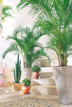 1000 images about truffaut plantes d 39 int rieur on - Support de plantes d interieur ...