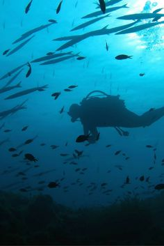 School of Barracudas -  Scuba Diving in Porquerolles, France -  Underwater photography 101: get better pictures in 5 easy steps – World Aventure Divers – read more on: https://worldadventuredivers.com/2015/06/23/underwater-photography-101-get-better-pictures-in-5-easy-steps/