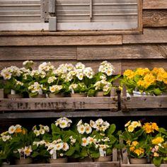 Fresh flowers in a rustic display. Love it.