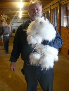 german angora rabbits - Google Search