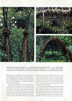 wigwam stakes secured with rope like clematis stems