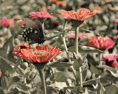 colorized butterfly - Annie Grey Photography - anniegrey.com