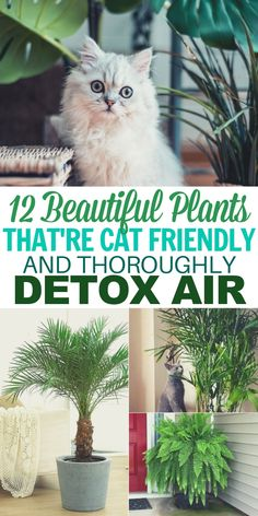 12 Air Filtering Plants Safe for Pets - - These 12 common house plants that filter your air are safe for cats and perfect for healthy home decor on a tight budget. Cat Safe House Plants, Houseplants Safe For Cats, Common House Plants, Cat Plants, House Plants Decor, Plants Toxic To Cats, Safe Plants For Cats, Indoor House Plants, Indoor Plants Clean Air