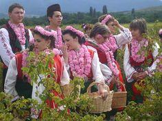 българска маслодайна роза - Google Търсене