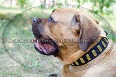 Gorgeous #Leather #Collar - Fashion Exclusive Design - Special 33 plates - $34.90 | www.fordogtrainers.com