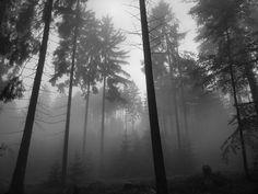 Foggy Forest Dark Grey Trees Smokes Creepy Wallpaper #132610 - Resolution…