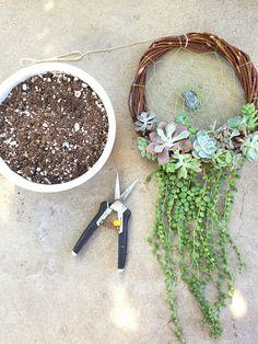 Botanical Bright - Taking Apart Your Living Succulent Dreamcatcher