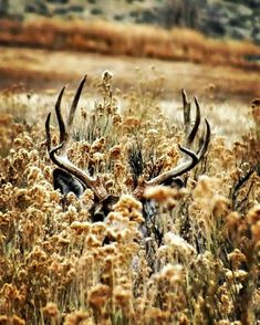 Where do you start if you want to take memorable wildlife shots? Some nature wildlife photography courses? Mule Deer Hunting, Quail Hunting, Archery Hunting, Hunting Photography, Wildlife Photography, Big Deer, Bow Hunter, Deer Family, Fishing Gifts