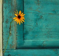 Sunflower Yellow and Turquoise Azul Tiffany, Tiffany Blue, Shades Of Turquoise, Shades Of Blue, Yellow Turquoise, Black Eyed Susan, Tumblr Wallpaper, Mellow Yellow, My Favorite Color