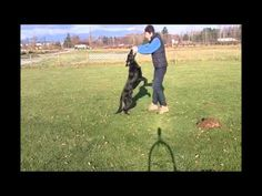 Competition Obedience Dumbbell Games - YouTube