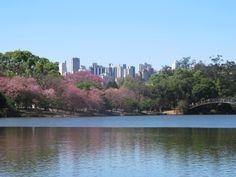 O contraste da natureza e a cidade, em São Paulo - Brasil