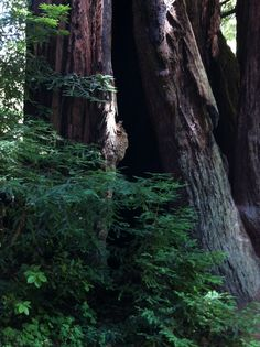 """An afternoon in the redwoods... """"my little corner of the world""""... beauty, quiet, reflection"""