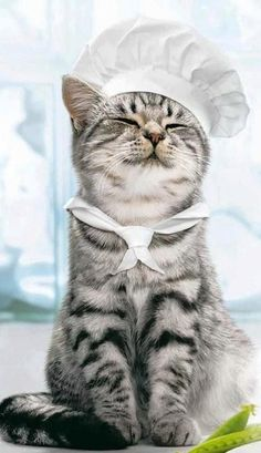 """"""" Today in Kitty's Kitchen, weez will be preparin' snap green peas wif lady bugs, but I furgot where I putz de recipe. Az a result, me show will be an hour late."""""""
