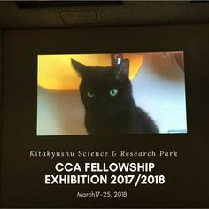 CCA Kitakyushu operates Fellowship Program for young artists and researchers those who are engaged in art, curatorial work, design and architecture.  In the end of the program, the fellows are required to present the results of their project either in the report, exhibition, etc. with advice from the directors. Yamaguchi, How To Get Warm, Fukuoka, Getting Bored, I Love Cats, Research, Whimsical, Presents, Advice