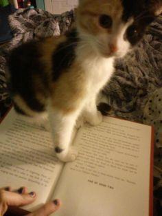 Mascotas y libros