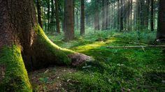 Orman Manzaraları