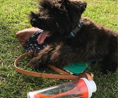 Happy puppy, happy life. #eco-friendly #sustainable #Melbourne