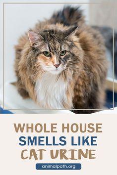 Cleaning Cat Urine, Remove Cat Urine Smell, Cat Pee Smell, Cat Urine Smells, Pretty Kitty, Pretty Cats, Cleaning Checklist, Cleaning Hacks, Cat Urine Remover