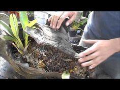 Como hacer un tronco plantado de orquídeas, bromelias, tilandsia    Orquiplanet - YouTube