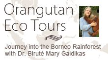 Borneo - As hard as it may be to believe I would love to participate in one of OFI's Eco Tours.